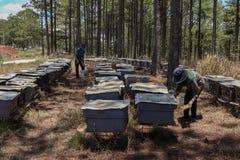 工作在蜂农场的蜂农 库存照片