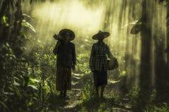 工作在雨林的亚裔老妇人 免版税图库摄影