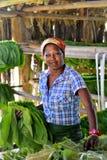 工作在雪茄工厂的古巴妇女 图库摄影