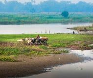 工作在领域的农夫 免版税图库摄影