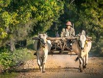 工作在领域的农夫 免版税库存照片