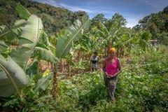 工作在领域的未认出的妇女在马球,巴拉奥纳,多米尼加共和国附近 免版税库存照片