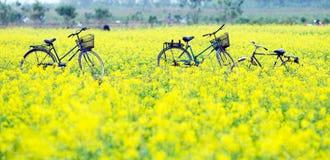 工作在黄色花田改善的农夫 太平市是在洪河三角洲的一个沿海省在北越南 免版税图库摄影