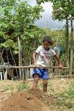 工作在细农的拉丁美州的女孩 免版税库存照片