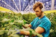 工作在水力剪刀推力平台的友好的农夫自温室 免版税图库摄影