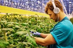 工作在水力剪刀推力平台的友好的农夫自温室 库存图片