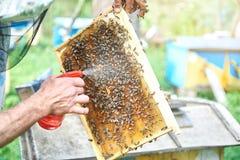 工作在他的蜂房的蜂农拿着蜂窝框架 库存照片