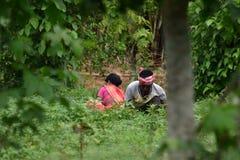 工作在他们自己的农田的小农 免版税图库摄影