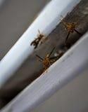 工作巢的纸质黄蜂在佛罗里达 美国 免版税图库摄影