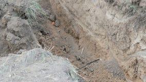 工作挖掘机有害的光导电缆 股票录像
