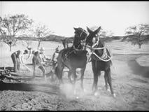 工作有耕犁马的农夫土地 股票录像