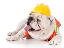 工作犬佩带的建筑背心 免版税图库摄影