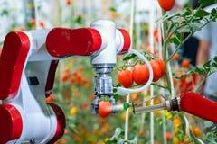 工作的农业未来派机器人自动化的聪明的机器人农夫喷洒化肥 免版税图库摄影