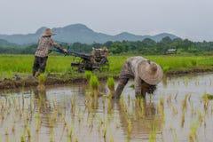 工作的农夫种植在稻田的米 免版税图库摄影
