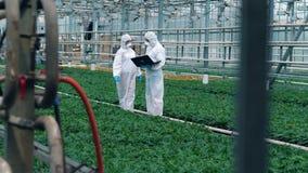 工作的生物学家自温室检查增长的植物 股票录像