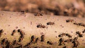 工作的蚂蚁的小组爬行和 免版税库存照片