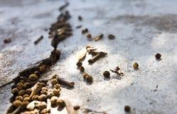 工作的蚂蚁 库存照片