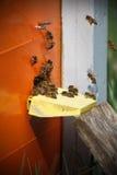 工作的蜂画象  库存图片