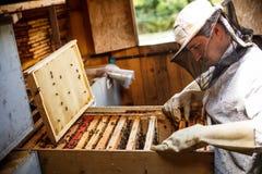 工作的养蜂家 库存图片