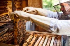 工作的养蜂家 免版税库存图片