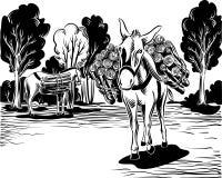工作的驴 免版税图库摄影