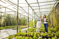 工作者和顾客在一个温室里 免版税库存图片