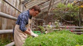 工作者在温室,有片剂的妇女农艺师检查了幼木,花匠是水厂的人 股票视频