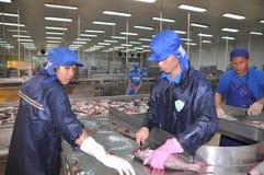 工作者在转移他们前杀害pangasius鲶鱼到下条生产流水线在湄公河三角洲的海鲜工厂 免版税库存图片