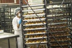 工作者在面包、蛋糕和意大利节日糕点产业的生产线工作在圣保罗 免版税库存照片