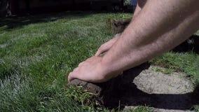 工作者手滚动新的草坪的草皮草 股票视频