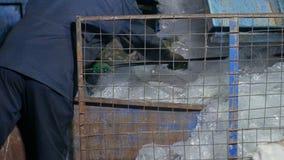 工作者排序在一棵回收废物植物的玻璃纸影片,运用 库存照片