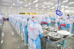 工作者是剥和处理新鲜的未加工的虾在海鲜工厂在越南 免版税库存图片