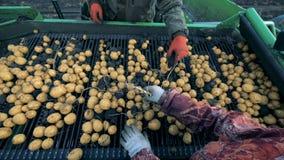 工作者清洗传动机与土豆,顶视图 股票录像