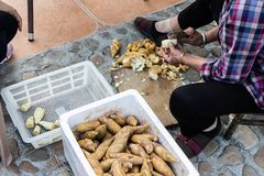 工作者清洗食物的年轻玉兰 玉兰是在白色箱子的没有漆的谎言 免版税库存图片