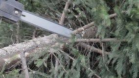 工作者由锯削减了一个树枝 影视素材