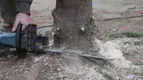工作者由锯砍一棵树 股票录像