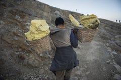 工作者运载在伊真火山火山口里面的硫磺在伊真火山火山,印度尼西亚 库存图片