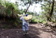 工作者运载在火山口里面的硫磺 库存照片