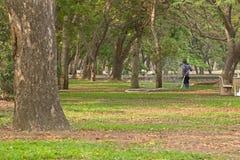 工作者水厂,大树在公园 图库摄影