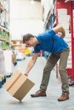 工作者以腰疼,当举箱子在仓库里时 免版税库存图片