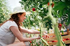 工作自温室的可爱的愉快的女性农夫 免版税库存照片