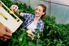 工作自温室的可爱的愉快的女性农夫 库存图片