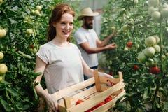 工作自温室的可爱的愉快的女性农夫 免版税库存图片