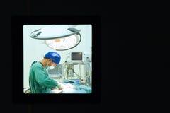 工作运转中室的一位兽医医生 免版税图库摄影