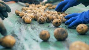 工厂劳工排序和采撷土豆在传动机,关闭 影视素材