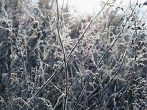 冻结工厂在冬天 免版税库存图片
