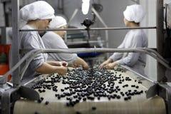 工厂橄榄 免版税图库摄影