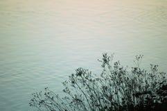工厂池塘 免版税库存照片