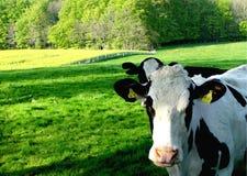 工厂牛奶 免版税库存照片