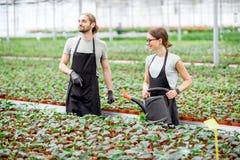 工厂生产温室的工作者 免版税图库摄影